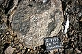 S of Mt Jackson pink-weathered breccia with megacrystic granite clasts 2.jpg