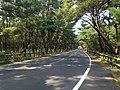 Saga Prefectural Road No.250 in Niji Pine Grove 1.jpg