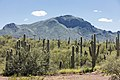 Saguaro forest in Sonora 02.jpg
