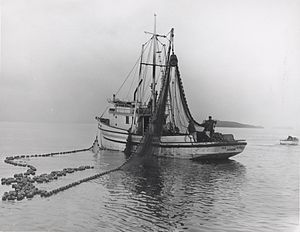 Seine fishing - Salmon seiner with power block 1967