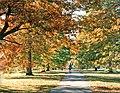 Scarlet Oak avenue, Oakwood Park, London N14 - geograph.org.uk - 897212.jpg