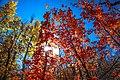 Scenic fall colours along Utah Hwy 14 - (22190363993).jpg