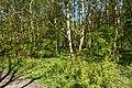 Schleswig-Holstein, Fockbek, Naturschutzgebiet Fockbeker Moor NIK 1630.jpg