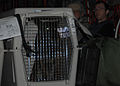 Security Forces Handler and K-9 Head to Iraq DVIDS146364.jpg