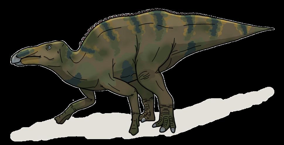 Shantungosaurus life