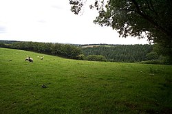 Sheep grazing west of Brown Lane, on the Brendon Hills - geograph.org.uk - 198291.jpg