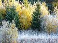 Sheksna River 09 (4085410587).jpg