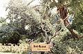 Sign at Busch Gardens, Tampa, Florida, 1972.jpg