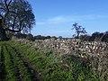 Silchester Roman city walls 41.jpg