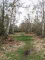 Silver Birch Woodland on Bookham Common - geograph.org.uk - 1237597.jpg