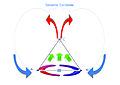 Sistema di equilibrio ( fig 4 ).jpg