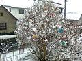 Skořápkovník pod sněhem na Vysočině - příprava na Velikonoce.jpg