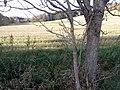 Slatiny - panoramio.jpg