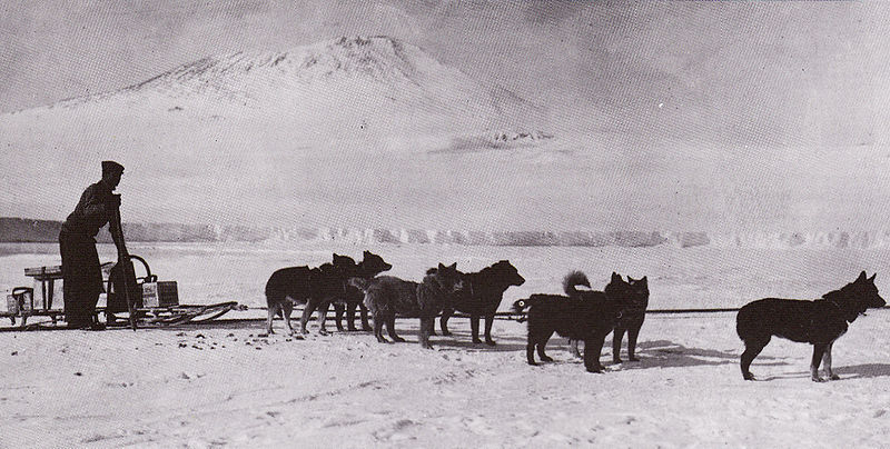 File:Sled dogs - Terra Nova Expedition.jpg