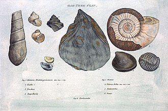 History of paleontology - Illustration from William Smith's Strata by Organized Fossils (1817)