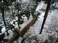 Snow in Rome 09.jpg