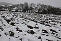 Snowscape at Elmley Castle - geograph.org.uk - 1162833.jpg