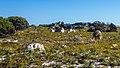 South Africa - Cape of Good Hope Trip (32198472832).jpg
