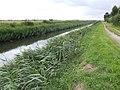 South Holland Main Drain - geograph.org.uk - 513673.jpg