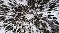 Sparse trees in the snow (Unsplash).jpg