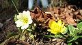 Spring in Botanic Garden Cluj-Napoca (3375408461).jpg