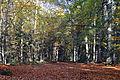 Staatsforst Rantzau - Lichtung im Herbst 01.jpg