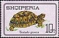 Stamp of Albania - 1966 - Colnect 136634 - Spur thighed tortoise Testudo graeca.jpeg
