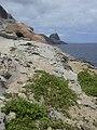 Starr-050404-0033-Portulaca oleracea-habit-Mokeehia-Maui (24715247396).jpg