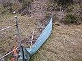 Starr-100317-3917-Anthoxanthum odoratum-habit with fence and wash out bib-Pohakuokala Gulch-Maui (24382710264).jpg