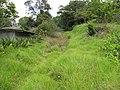 Starr-110331-4717-Strelitzia reginae-habitat-Shibuya Farm Kula-Maui (24451481694).jpg