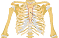 Sternum location.png