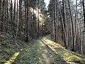 Sti mellom Tanberglia og Støalandet, Ringerike (2).jpg