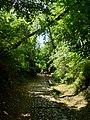 Stradina che porta verso Pian Sciresa nel Parco del Monte Barro.jpg