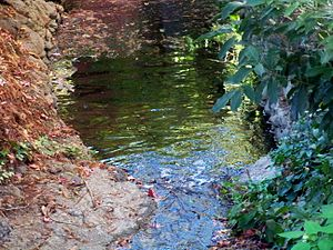 Strawberry Creek - Image: Strawberry Creek 4