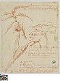 Studies van bladeren en vruchten van een kastanjeboom, 1757-08-24, Groeningemuseum, 0041423000.jpg