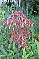 Subtropisches Blütenbäumchen.jpeg