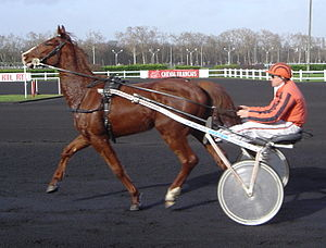 French Trotter - A French Trotter in a sulky race at the hippodrome of Vincennes