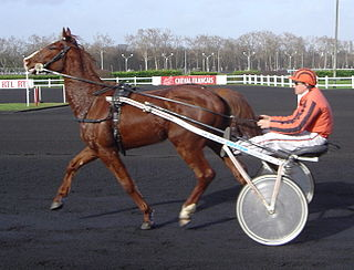 French Trotter French breed of trotting horse