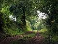 Summer Cleave Lane - geograph.org.uk - 1521031.jpg