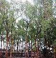 Sundarban (33).jpg