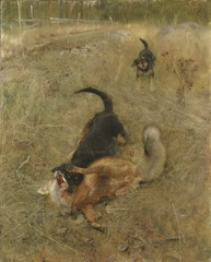 Swedish Foxhound and Fox