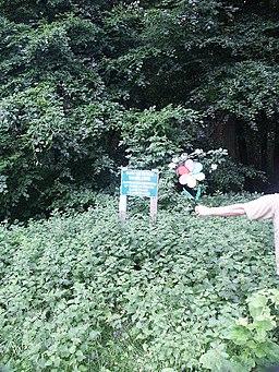 Swinton Estate Woods - geograph.org.uk - 101529