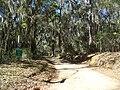 Tallahassee FL Rollins House road01.jpg