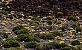 Teide National Park Tenerife IMGP2010.jpg