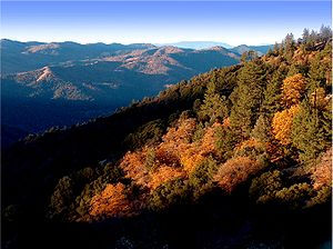 Tehachapi Mountains - The California mixed evergreen forest plant community in the upper Tehachapi Mountains