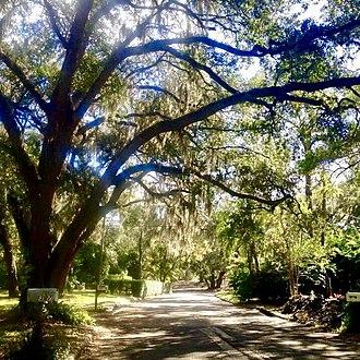 Temple Terrace, Florida - Glen Burnie Ave. looking south toward Glen Arven