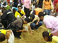 Thai Royal Ploughing Ceremony 2009 - rice finding 4.jpg