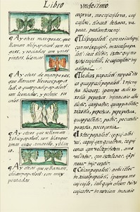 The Florentine Codex- Butterflies.tif