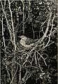 The home life of wild birds; a new method of the study and photography of birds (1901) (14747641614).jpg