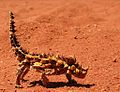 Thornydevil02.jpg